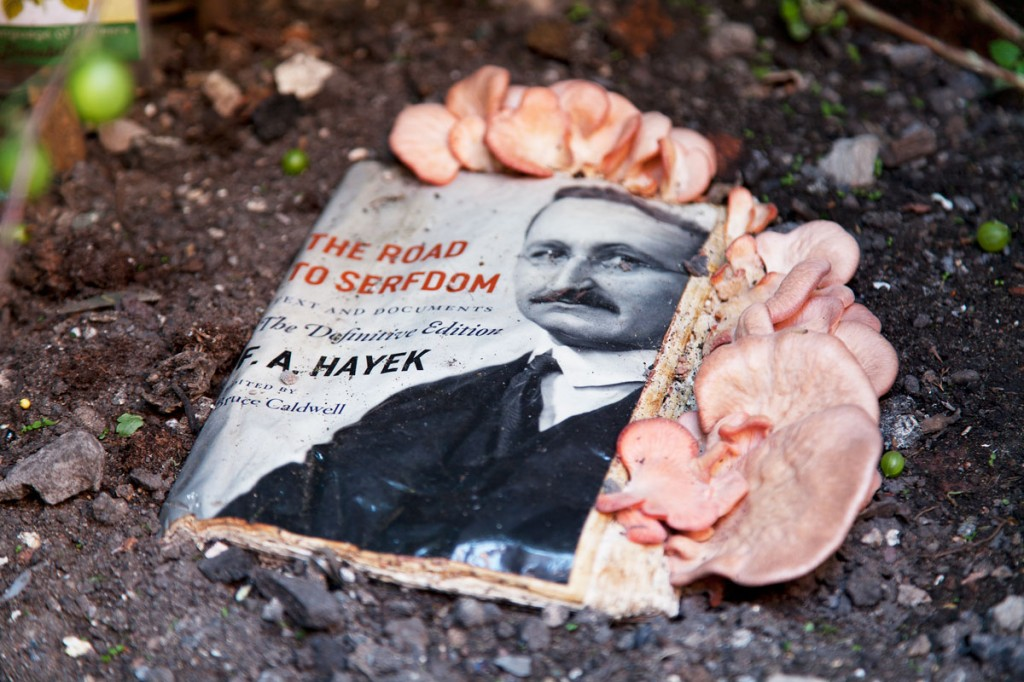 Manifesto #2: Hayek's Road to Serfdom being detoxified by oyster mushrooms